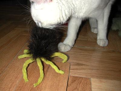 Cuando conocí a la arañita