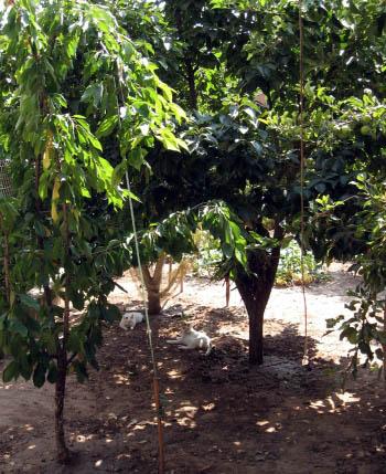 Copito de Barakaldo y Ambulanico entre los árboles