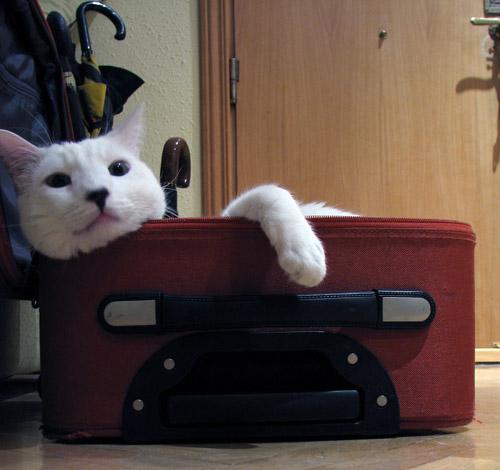 Copito prepara la maleta para unas merecidas vacaciones