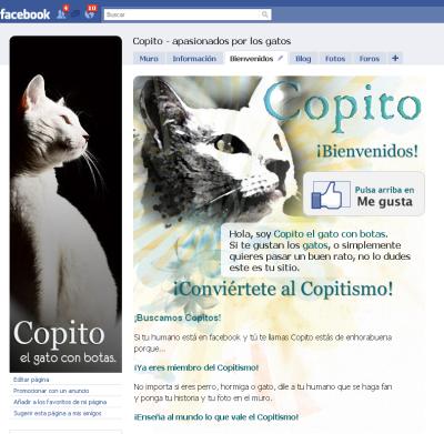 Copito-apasionados-por-los-gatos