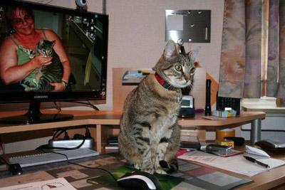 Tiger en su nueva casa