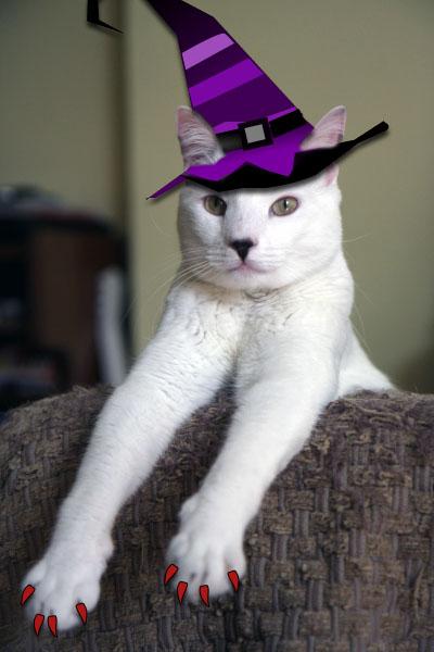 Copito con sombrero de bruja piruja