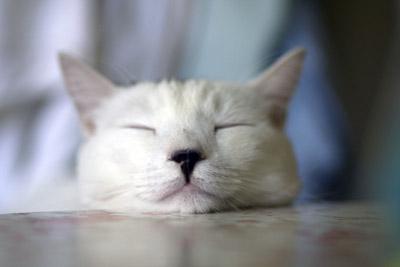 Copito se duerme esperando el gran acontecimiento