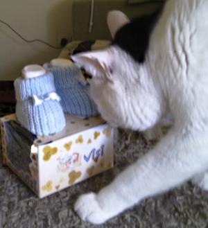 Copito inspecciona los patucos del gatito gordo