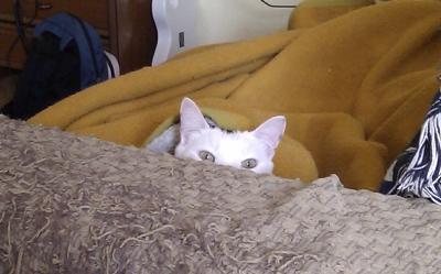 Â¿Ha terminado ya el gatito gritón?