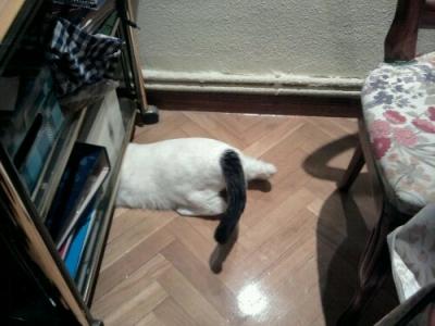 Cuando el gatito gordito llora yo me escondo