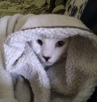 Cuando el gatito gordo empieza a llorar, yo me escondo.